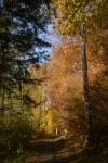 Waldtag – 400-Jahre Jubiläumsfestakt